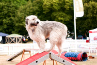 Dog Photography - Kratu during Agility at DogFest Knebworth House 2017