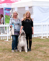 Dog Photography - Tess, Kratu and Lucy Heath DogFest 2017 Knebworth House