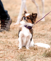 Dog Photography DogFest 2017 Knebworth House
