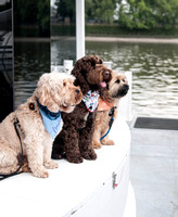 """Paws aboard""        London Dog Photography River Thames"