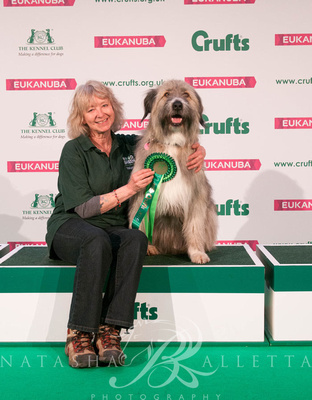 Tess and Kratu Rescue Dog Agility Crufts 2019 held at the Birmingham  National Exhibition Centre.