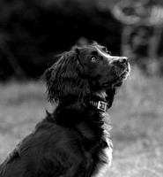 dog photography Rushmere country park Bedfordshire