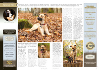 Bailey Article in July 2016 issue of Dogs Today magazine.