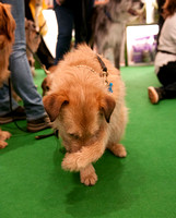 Gill Raddings Stunt Dogs Crufts 2018 held at the National Exhibi