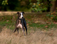 London Dog Photography