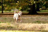 London Dog Photography.
