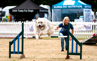 DogFest South 2017 Knebworth House and Gardens.