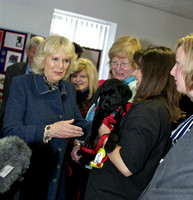 Camilla, Duchess of Cornwall. Medical detection dogs.
